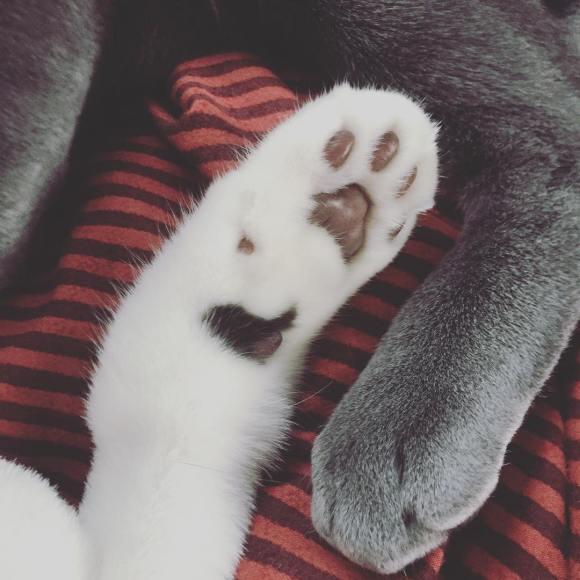 151129 w_n_r00 1 polly bally nth cat